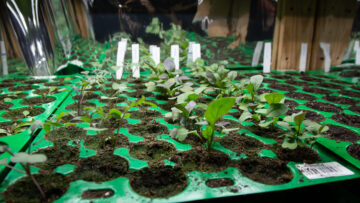 Fabriquer une mini serre pour semis en intérieur