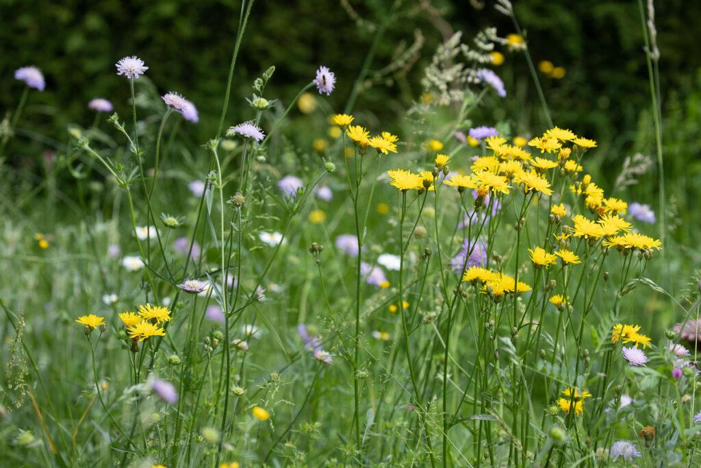 Fleurs sauvages spontanées